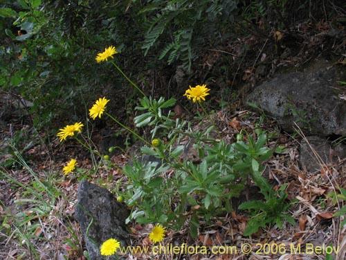 remedios para contrarrestar el acido urico hierbas para curar la gota