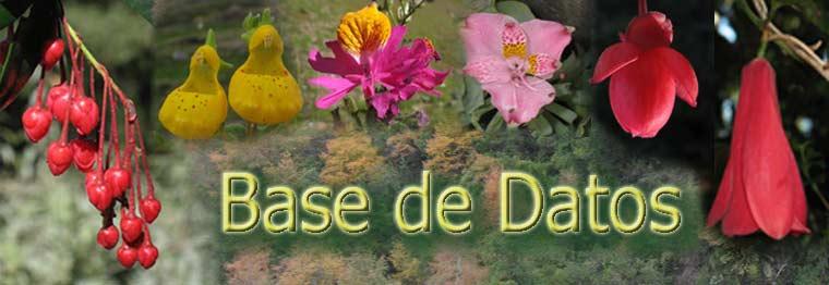 Base de datos de las plantas nativas chilenas con fotos Sdata