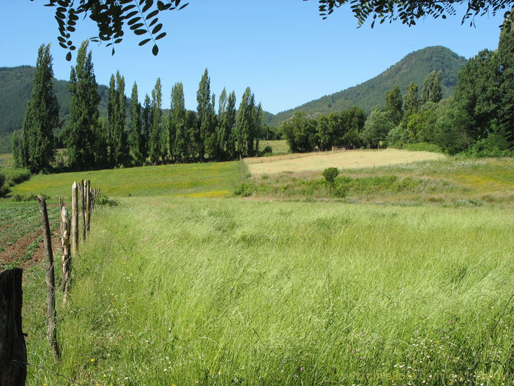 Image of countryside near Talca.