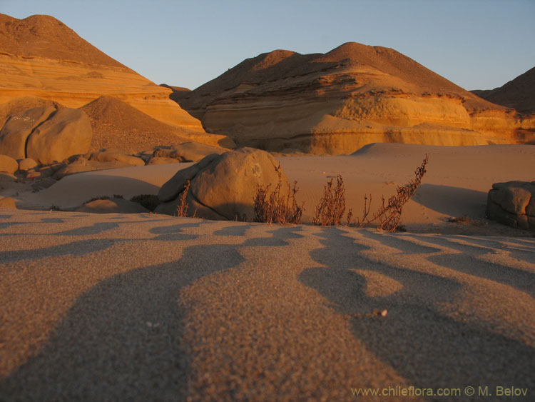 An image of Dunes at Copiapo