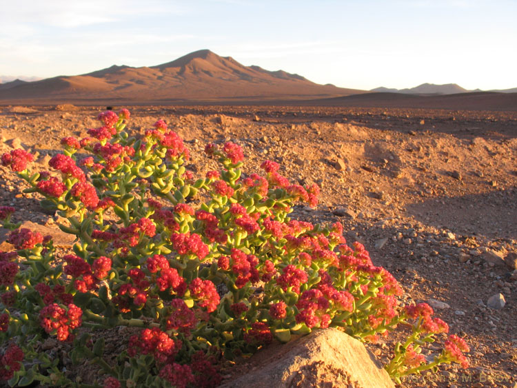 But sometimes the Desert blooms...: