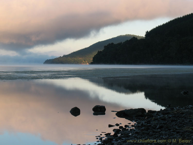 An image of Lake Lanalhue at Dawn.