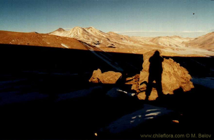 An image of a shadow of a person on a rock with mountain landscape behind, taken near the Salar de Pedernales at an altitude of 5000 m.